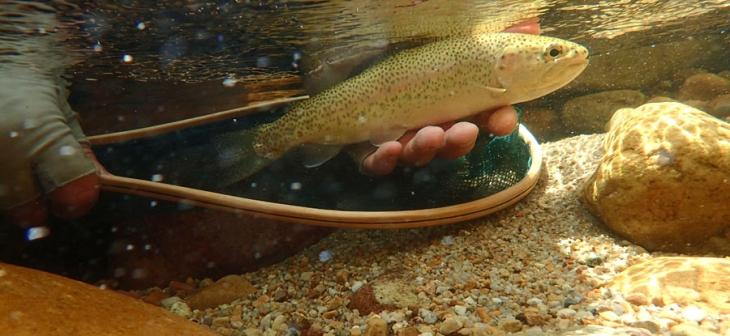 6_Trout_under_water_PA290424