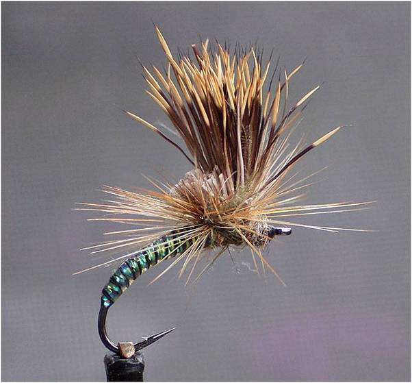 3 Klipspringer emerger 1