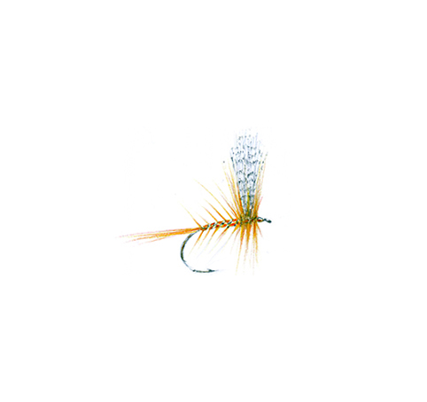 1 QUEEN OF THE WATERS DRY FLY