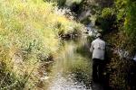 Willow stream, Balloch (17)