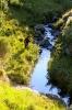 Willow stream, Balloch (1)