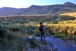 Willow stream, Balloch (3)