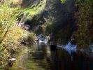 Willow stream, Balloch (4)