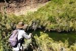 Willow stream, Balloch (6)