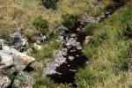 Willow stream, Balloch (9)