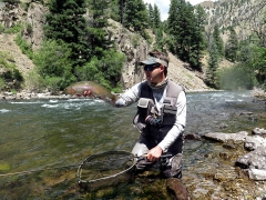 PROTEA FLY FISHER MATT RICH'S FAVOURITE STREAM FLY SELECTION –