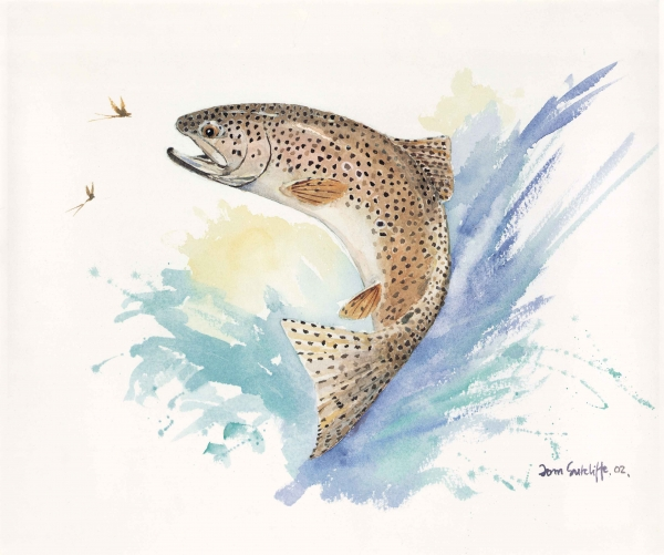 Jumping Rainbow Trout - Watercolour