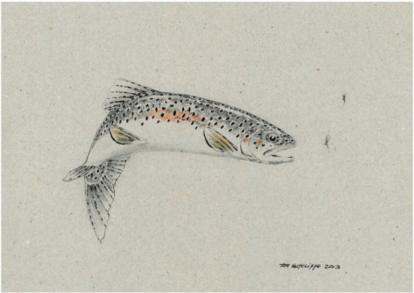 Trout sketch - full body