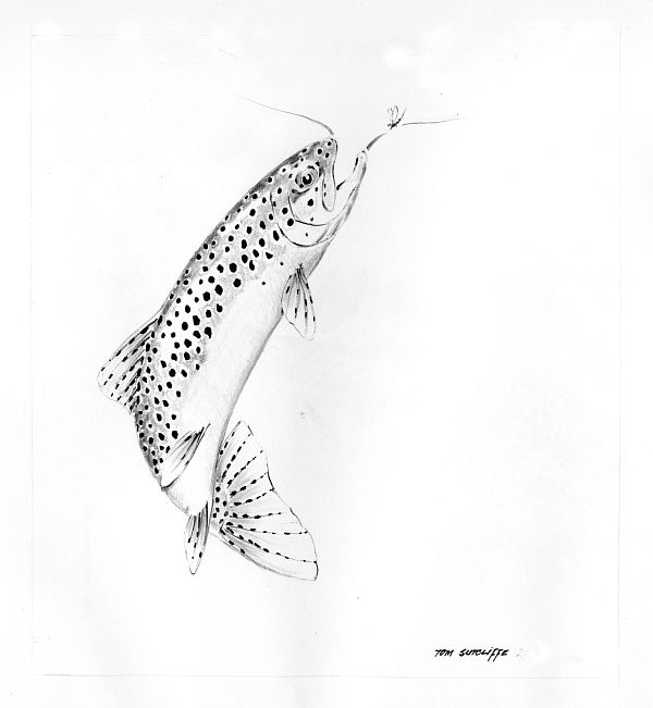 Trout Sipping Mayflies - Pen and Ink