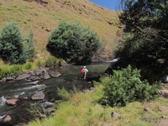 Wattles in the context of South African Trout streams - Text and pictures by Andrew Fowler