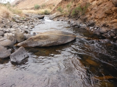 KZN Trout September trout report by Jan Korrubel