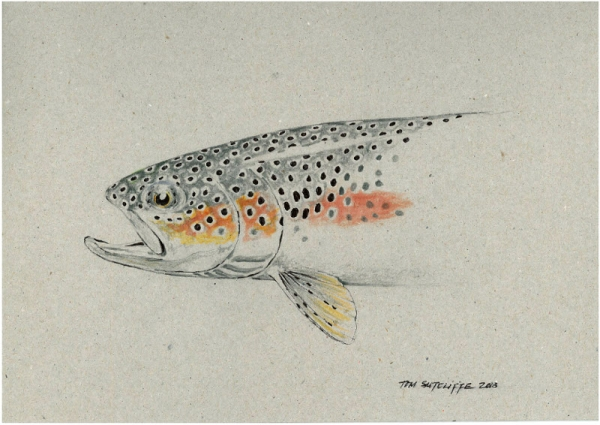 Trout Sketch - head