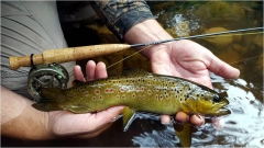 Short rods for small streams by Ed Herbst