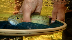 12 OCTOBER 2014 FLY FISHING NEWSLETTER -