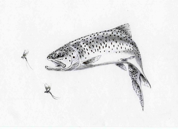 Rainbow Trout with Mayflies