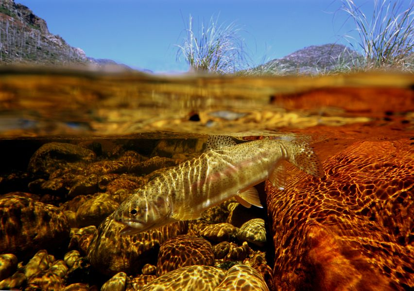 Underwater fly fishing photography tomsutcliffe the for Fly fishing photography