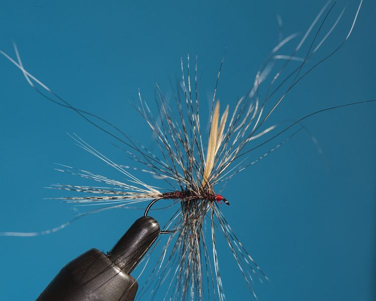 _A_FINAL_RAB_WITH_DUN_HACKLE