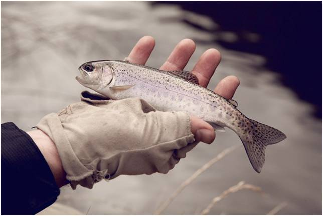 Rhodes_fly_fishing_in_winter_Coldbrook