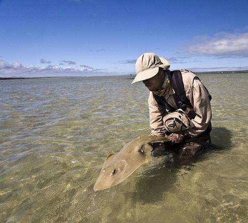 sand sharks stream