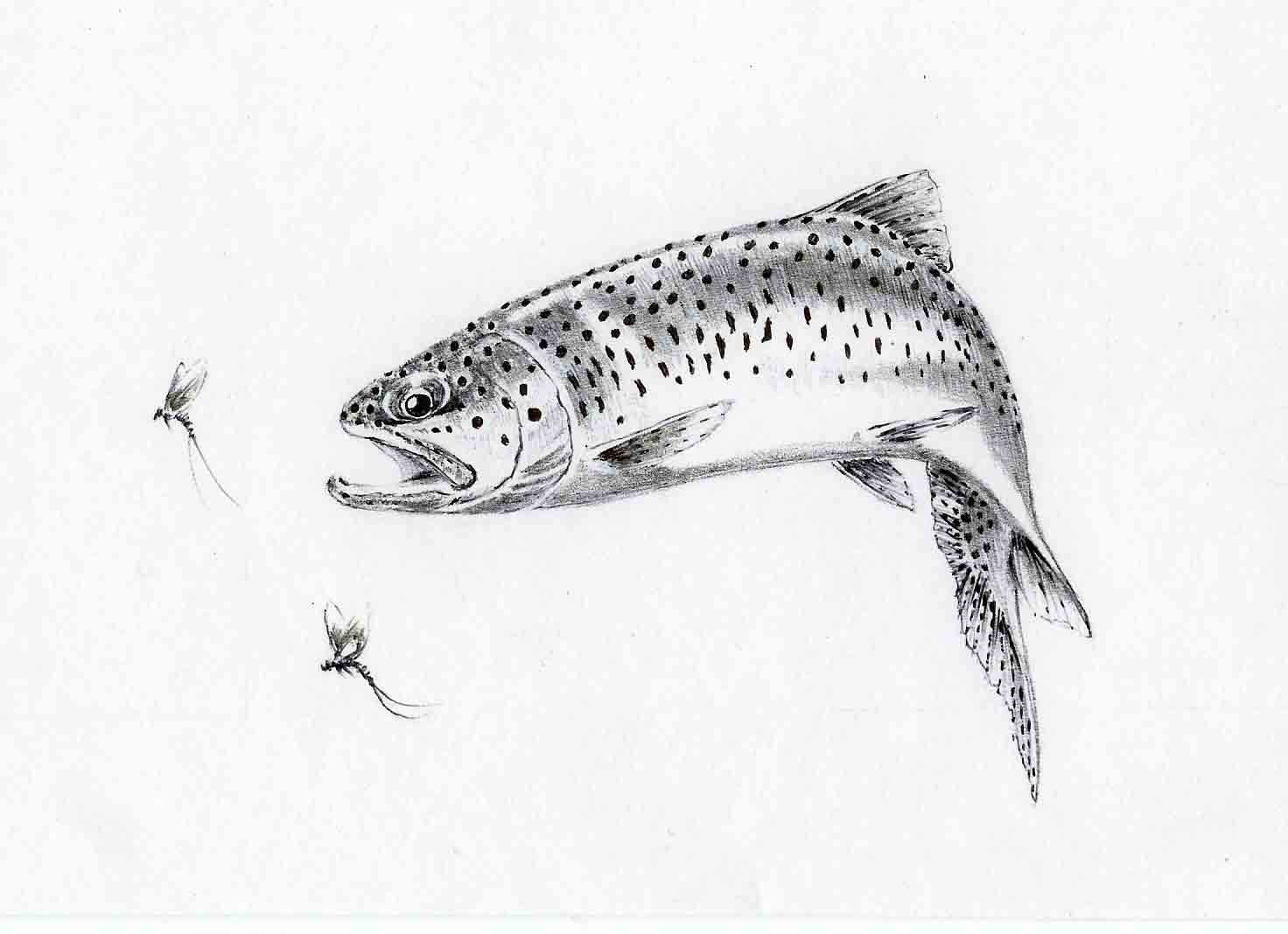 Fly fishing fly drawings - photo#24